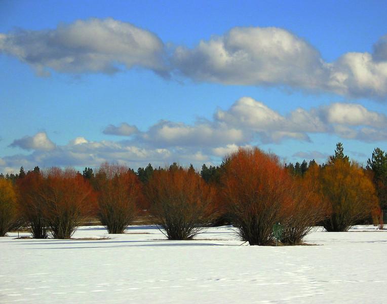 Kate Thomas Keown - BBR snow winter willows_1814 KTK.jpg