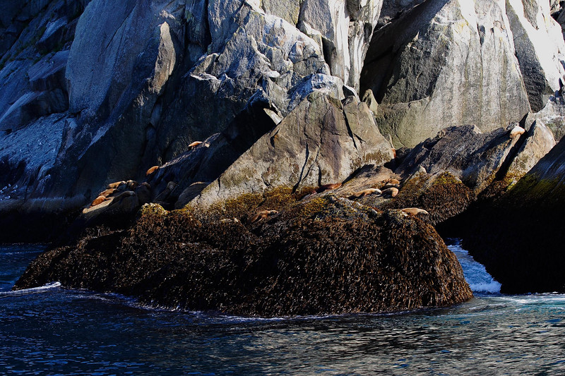 Kanai Fjord boat trip