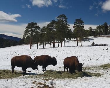 Colorado Springs Area