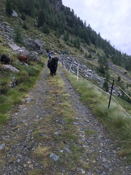 Paso del Muretto to Chiareggio