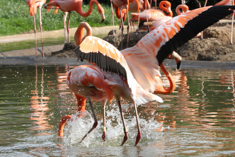 0805_Flamingos_023.jpg