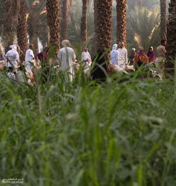 P1004105-1-Saroor-Samail- Oman.jpg