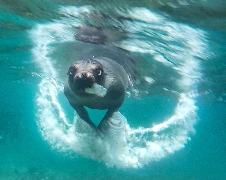 Sea Lion 4-2.jpg