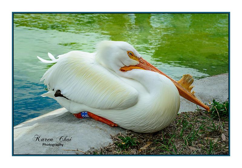 White bird laying down sm.jpg
