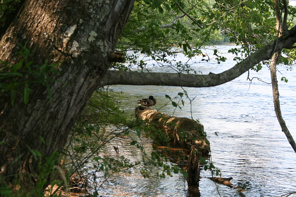 Day 7: Chattahoochee River - 11 May 2007