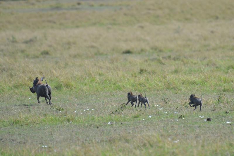 East Africa Safari 215.jpg