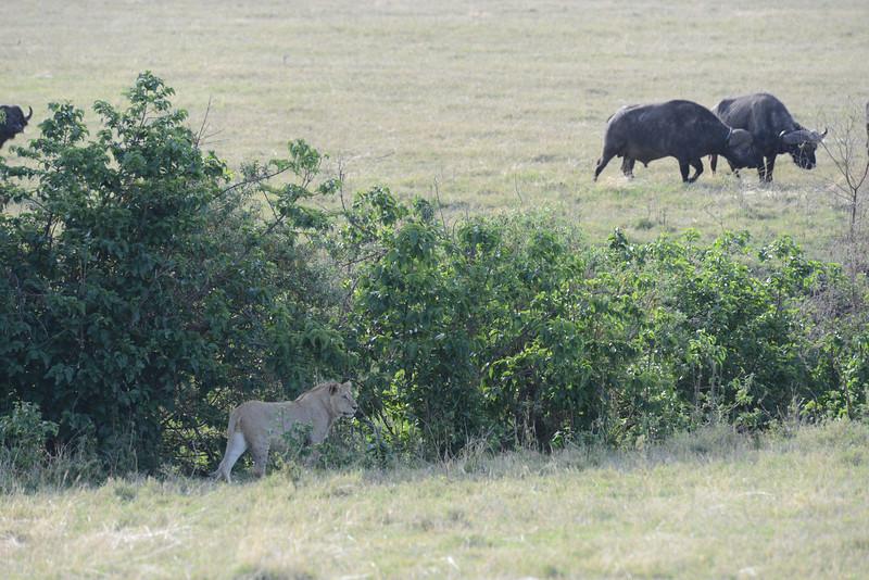 East Africa Safari 409.jpg