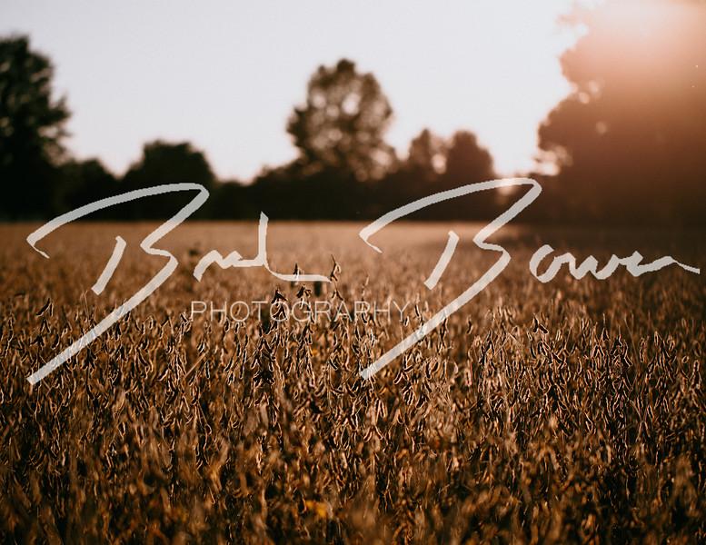 duskbeans-1.jpg