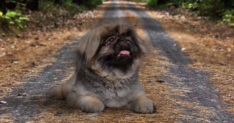 Dogy-zz2.jpg