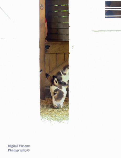 2016-07-17 Fort Wayne Zoo 1021LR.jpg