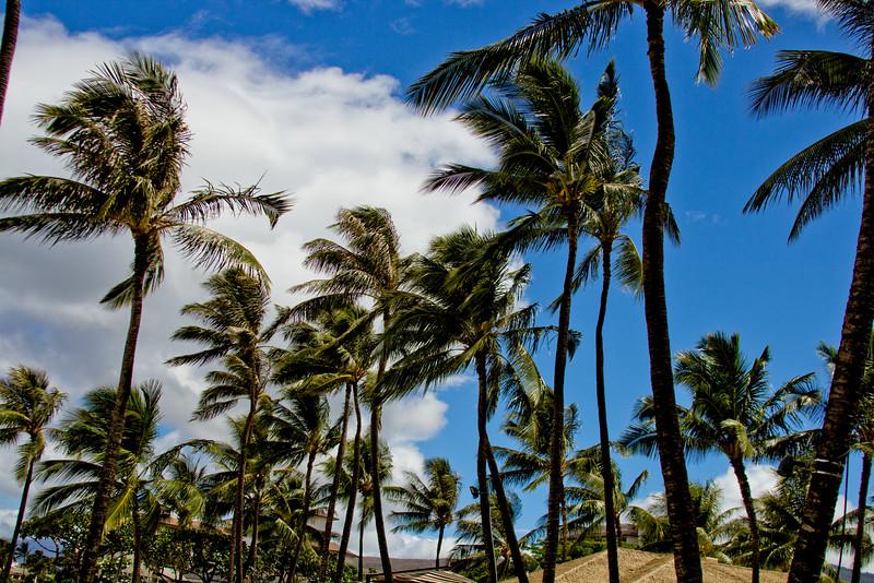 Journey into Oahu Photograph 17