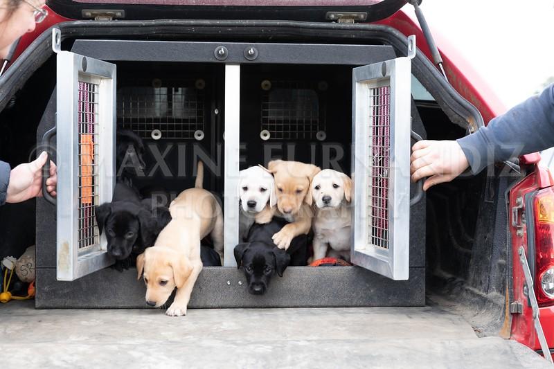 Weika Puppies 24 March 2019-8759.jpg