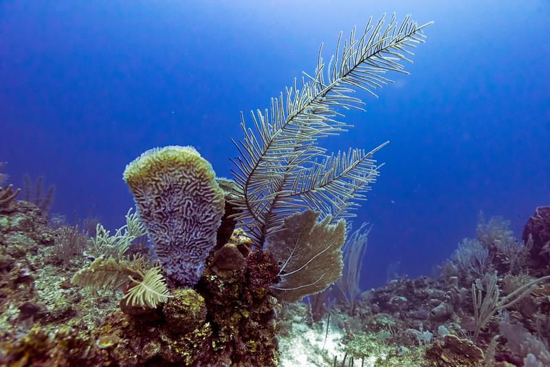 Coral reefs underwater, Belize Barrier Reef, Belize
