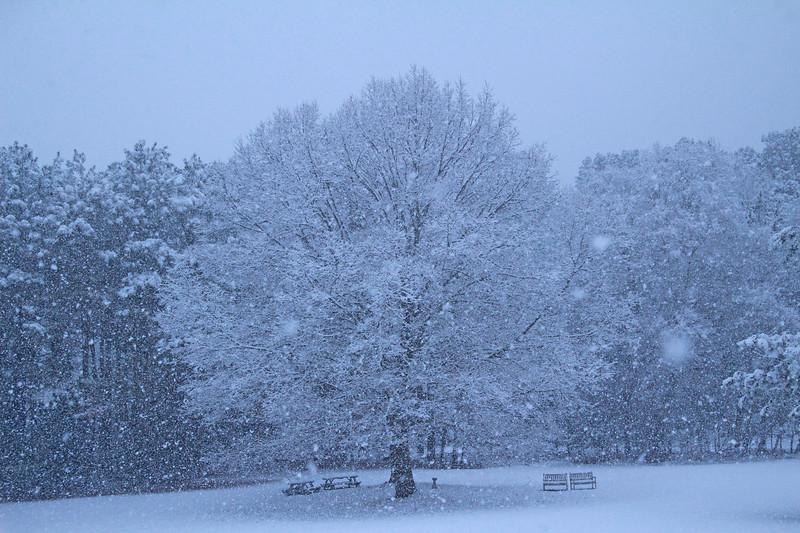 Snow 426