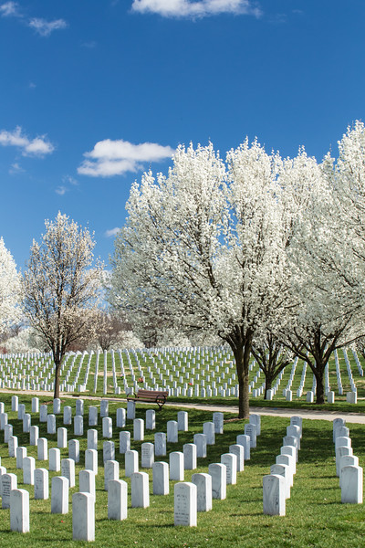 Spring Blooms JB Cemetery, St Louis