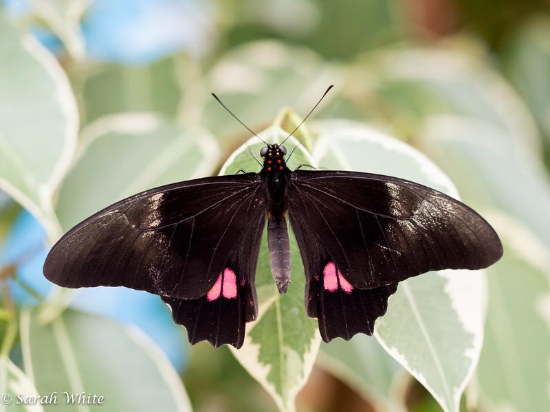 140503_ButterflyHouse_347.jpg
