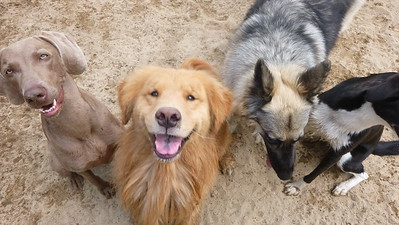 All Dogs Gym 7-15-2015