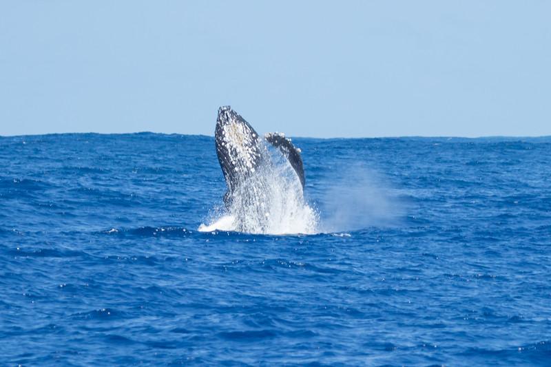 whales-leila-53.jpg