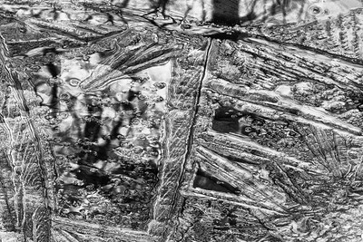 Reflections  in Ice