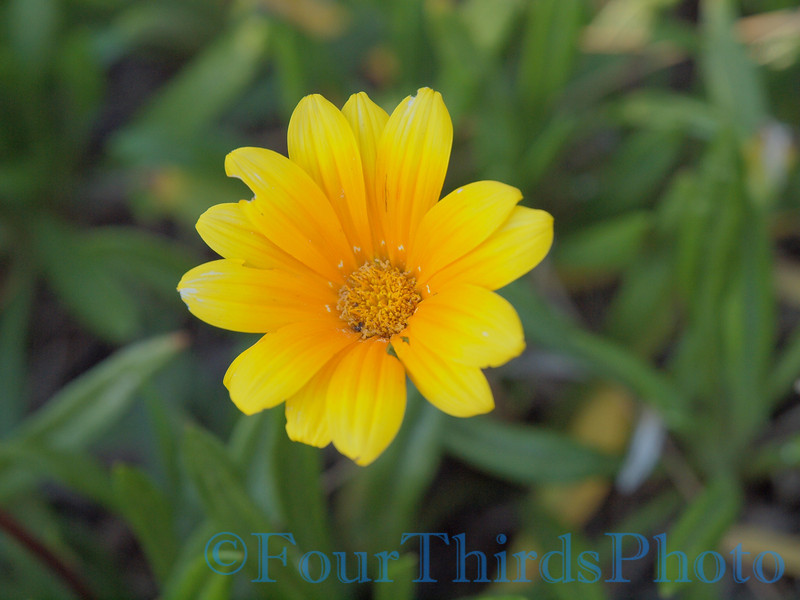 E-620 sample shots Flower Light Tone