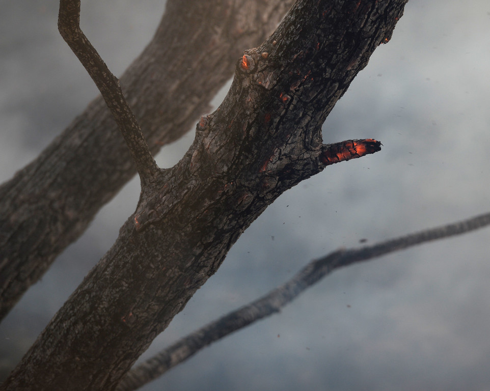 . A burning ember glows red on a tree trunk in a canyon not far from Foothill Dr. during the 500 acre plus Contra Loma fire in Antioch, Calif., on Wednesday, June 24, 2015. (Susan Tripp Pollard/Bay Area News Group)