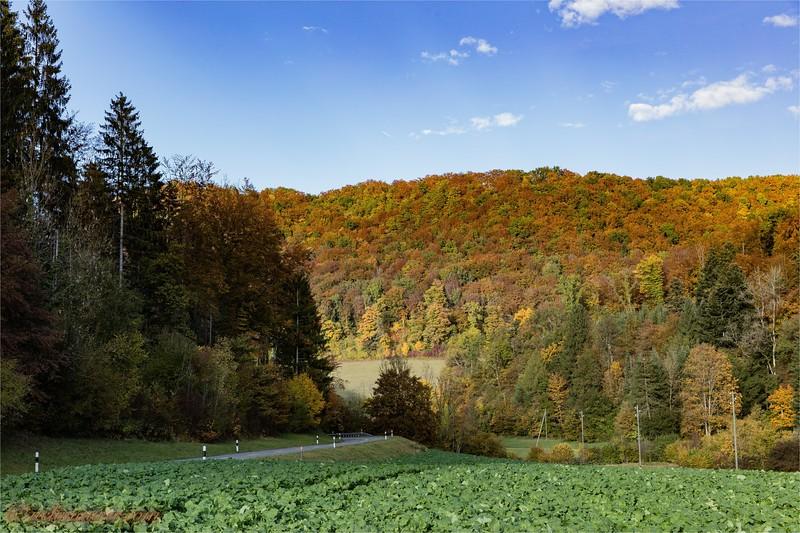 2016-10-22 Herbststimmung Aargau 0U5A1374.jpg