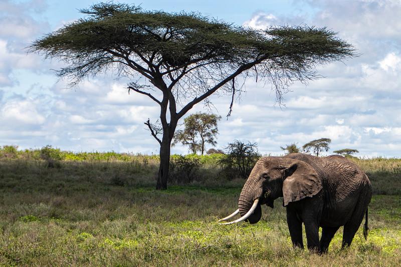 Africa 19 Jpegs_242.JPG