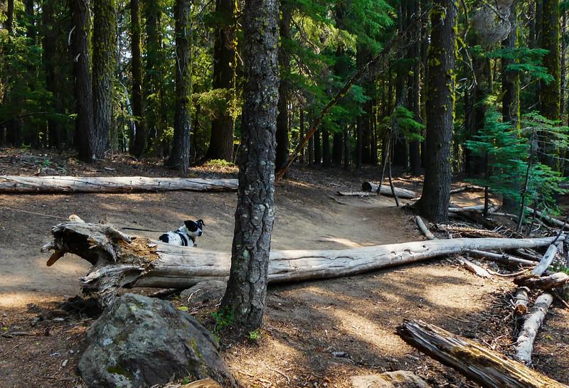 07-14-2021 Hiking Paulina Creek-46.jpg