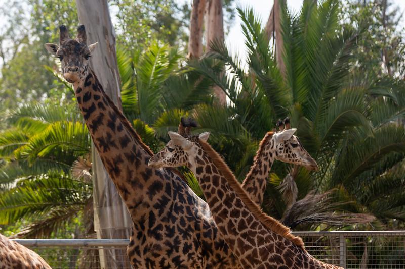 SD Zoo 3.20-144.jpg