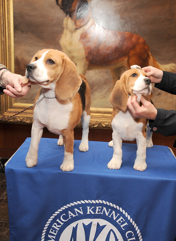 . Max, left, and Shiloh pose for pictures. (Photo by Gary Gershoff/Getty Images)