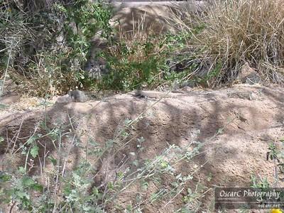 Honeymoon: Arizona-Sonora Desert Museum