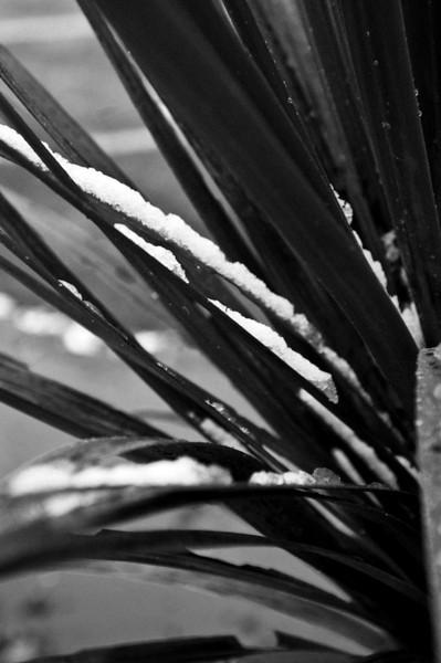 SnowInWelly12512.jpg