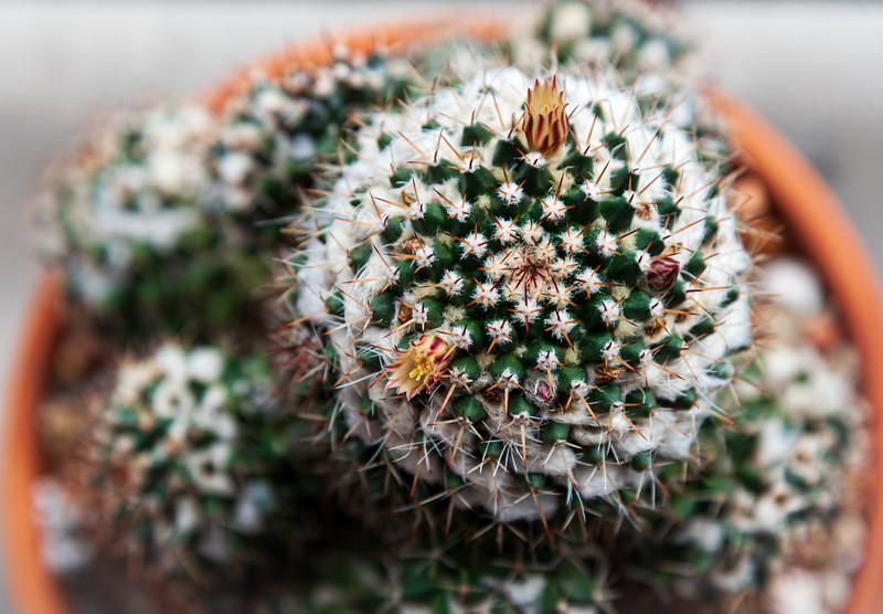 cactus-8806.jpg