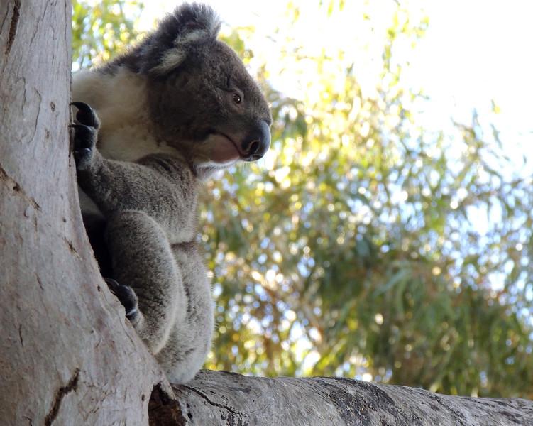 Australia 009 N.jpg