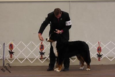 12-18mo Puppy Dog PVBMDC Sunday 2/20/2011