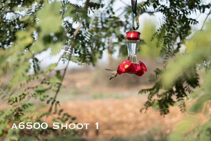 a6500 macro - Shoot 1-8.jpg