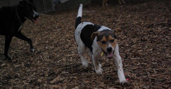 PICS JUNE 20::STYKER  (pup), BlackJack