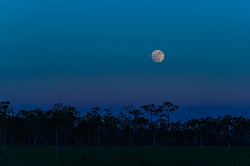 Everglades (20 of 60).jpg