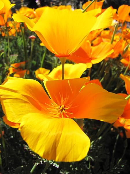 amh FLOWERS (1070).jpg