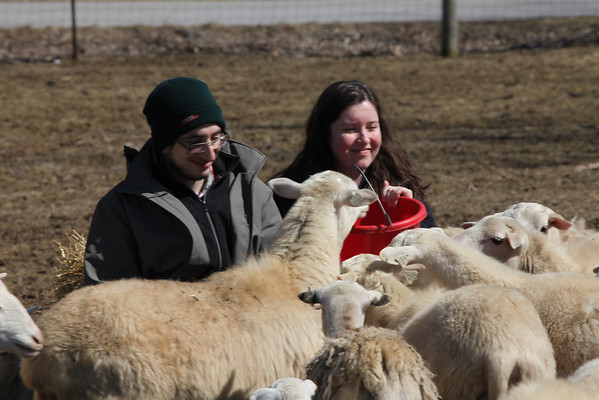 Pictures with sheep