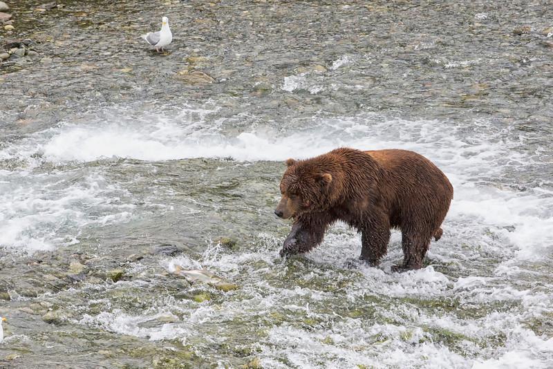 Alaska_2013_FH0T3440.jpg