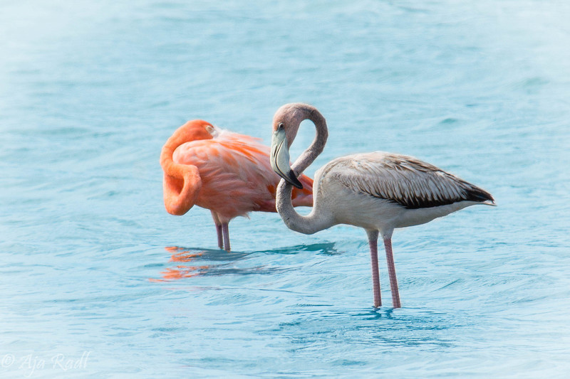 Baby Flamingo.jpg