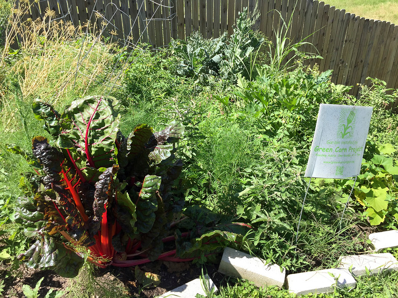 Two bountiful, though a bit overgrown, gardens for 2 apartment neighbors a few months after the spring dig-in.
