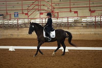 Horse 383