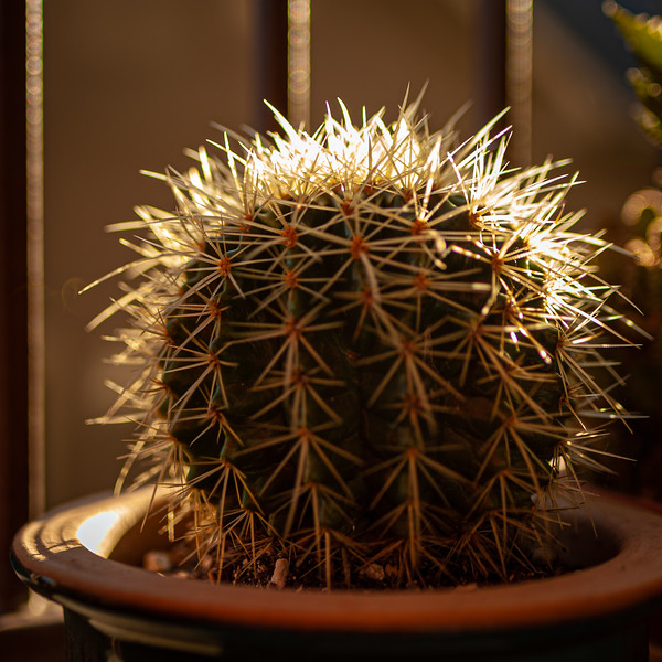 cactus 020120-1297.jpg