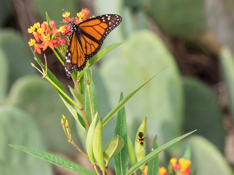 butterfly-3.jpg