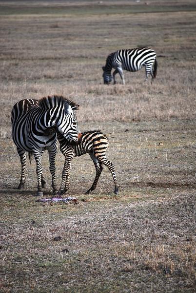 Ngorongoro (4).JPG