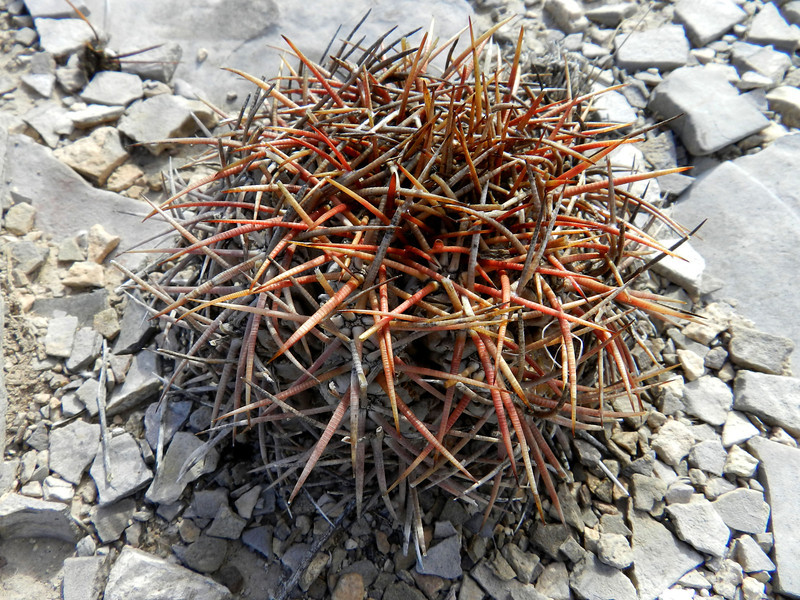 Cactus small short3.jpg