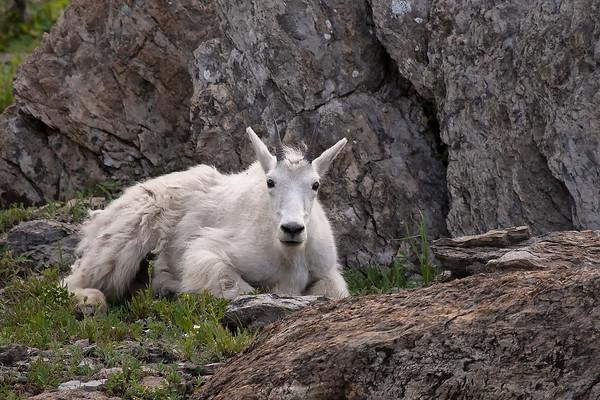 Glacier National Park (7/2008)