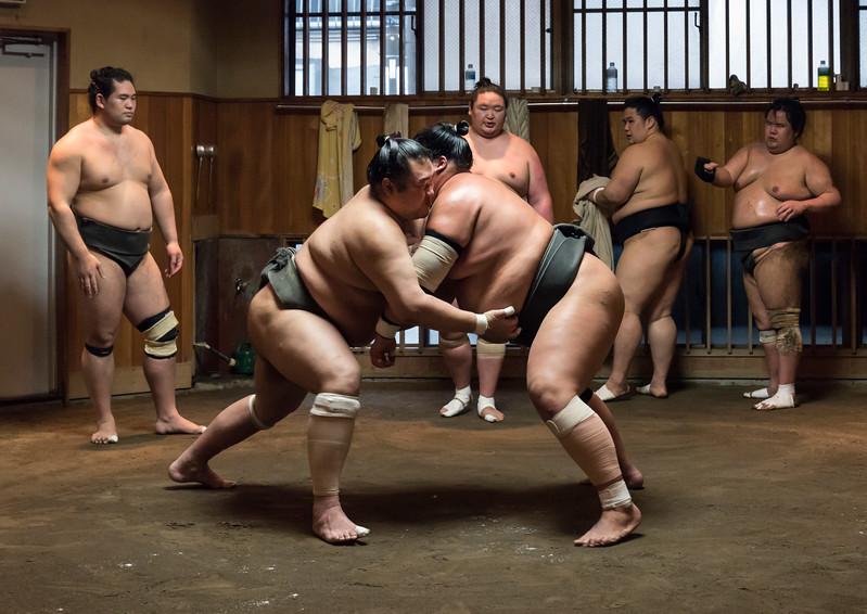 Sumo Training, Tokyo
